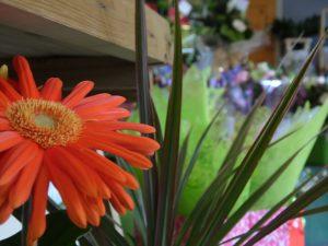 eden of chorley close up flower shot