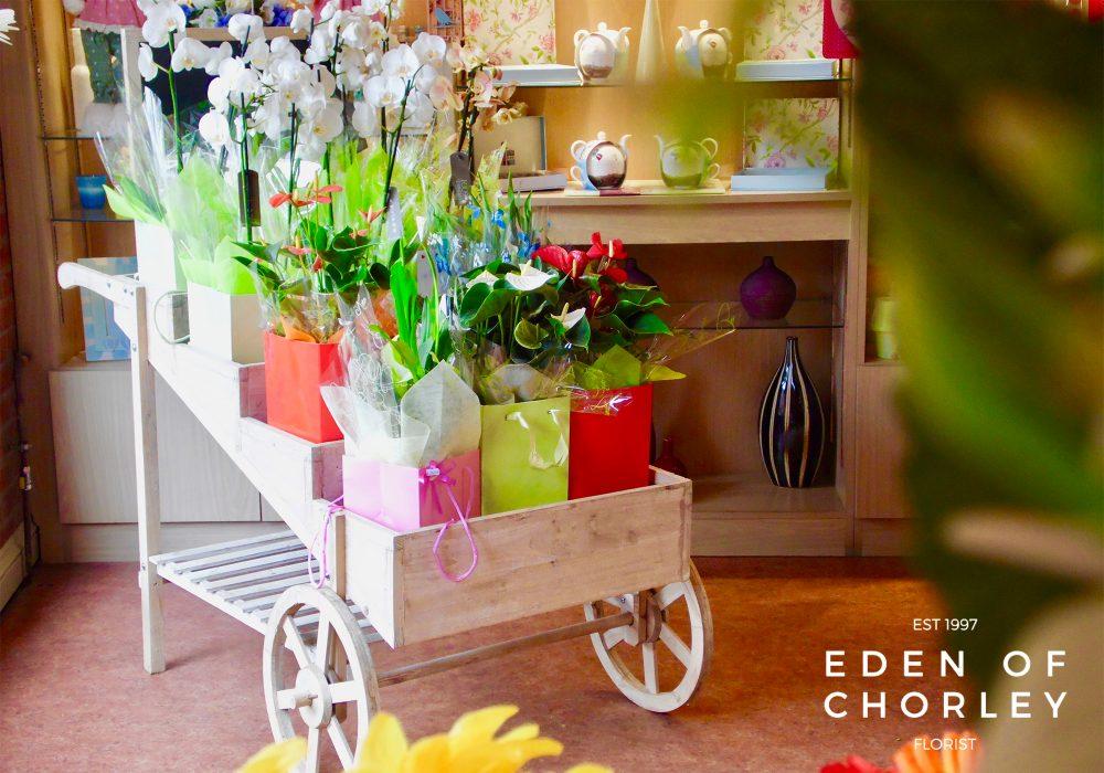 eden of chorley store
